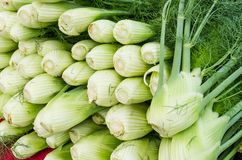 Fresh fennel bulbs at the market Stock Images
