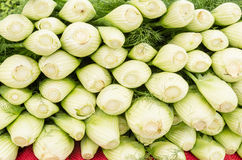 Fresh fennel on display at the market Royalty Free Stock Photo