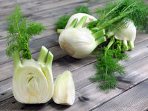 Fresh fennel grown in organic farming Royalty Free Stock Photos