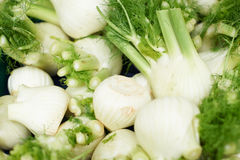 Fresh fennel Stock Photography