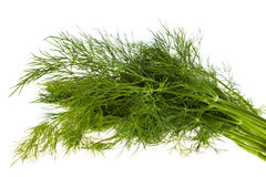 Fresh fennel isolated. Bunch of fresh fennel, isolated on white background royalty free stock image