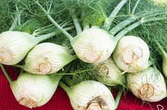 Fresh fennel at the market Stock Photos