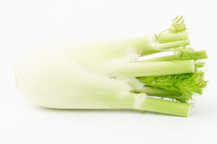 Fresh fennel. On white background Royalty Free Stock Photo