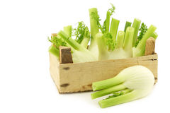 Fresh fennel in a wooden crate Stock Photos