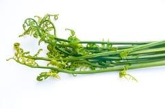 Fresh  fern Stock Photo