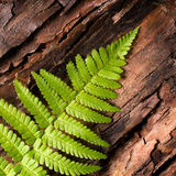 Fresh fern on bark background Stock Photos