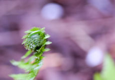 Fresh Fern Blurr Stock Photography