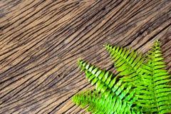Fresh fern border on grunge wood background Royalty Free Stock Image