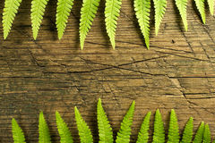 Fresh fern border on vintage wooden surface Royalty Free Stock Photo