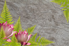 Fresh fern green leaves and pink lotus on grunge wooden background Stock Image