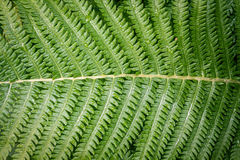 Fresh Fern Leaf with water drops Royalty Free Stock Image