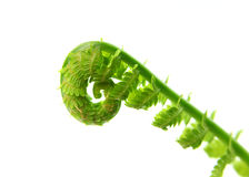 Fresh fern leaves Stock Image
