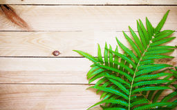 Fresh fern on wooden background, Top view with copy space. Fresh fern on wooden for background or backdrop, Top view with copy space Stock Image