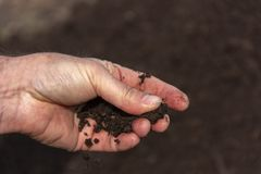 Fresh fertile soil in men`s palms close-up. A man holds a handful of fresh earth on his palm close-up stock photo