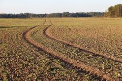 Fresh field. Stock Photos