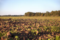 Fresh field. Royalty Free Stock Image