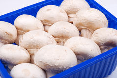 Fresh field mushrooms in a basket Royalty Free Stock Photography