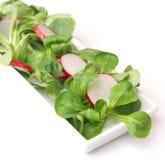 Fresh field salad with radish. A fresh field salad with radish Royalty Free Stock Photo
