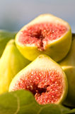 Fresh fig Stock Photo