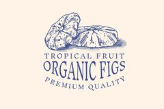 Fresh fig badge. Dried fruit Foliage label or logo. Cut pieces. Detox spice. Vector Engraved hand drawn sketch for stamp