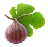 Fresh fig. On branch isolated on white Stock Photography