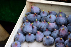 Fresh figs in a box Stock Images