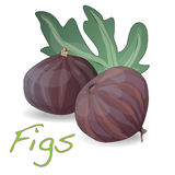 Fresh figs . Vector. Fresh figs  on white. Vector illustration Stock Photos