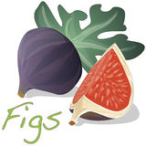 Fresh figs . Vector. Royalty Free Stock Photography
