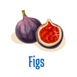Fresh figs whole and half cut emblem. Vector color  elements of tasty exotic fig fruit. Design element for juice, jam sticker label, snack package design Stock Photo