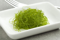 Fresh filamentous green algae Stock Image
