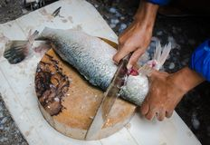 Fresh filleted fish were sold in the urban market. Bangkok, Thailand Royalty Free Stock Photos