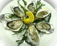 Fresh fine de Clair oysters on ice bed with lemon royalty free stock photos