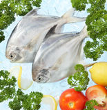 Fresh fish Royalty Free Stock Photography
