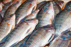 Fresh Fish. Being sold in a Dubai fish market Royalty Free Stock Photo
