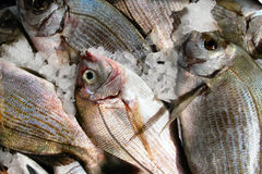 Fresh fish. On the fish market on Crete, Greece stock photography
