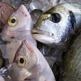 Fresh fish. Chilled in ice for sale Stock Photography