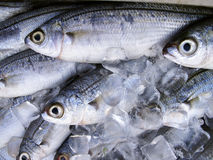 Fresh fish. Chilled in ice for sale Royalty Free Stock Photos