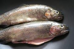 Fresh fish. Some fresh, raw fish in a pan Royalty Free Stock Photos