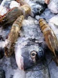 Fresh fish. Chilled in ice for sale Stock Images