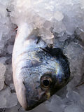 Fresh fish. Chilled in ice for sale Stock Photo