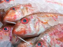 Fresh fish. On sale at a market in London Stock Photo