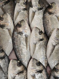FRESH FISH. Display of Fresh Fish at the fish market Royalty Free Stock Photo