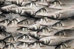 FRESH FISH royalty free stock image