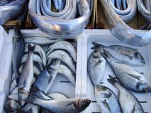 Fresh fish. On market for sale Royalty Free Stock Images