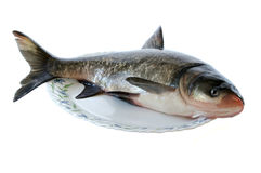Fresh fish. Against the white background Royalty Free Stock Images
