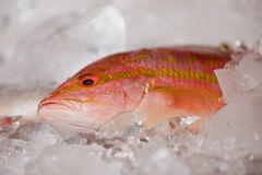 A fresh fish. Royalty Free Stock Photography