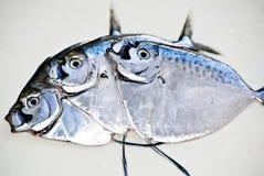 Fresh Fish Stock Photos