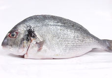 Fresh fish. Stock Photos