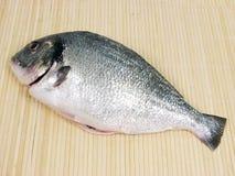 Fresh fish. Royalty Free Stock Photos