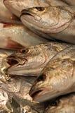 Fresh Fish Royalty Free Stock Photos